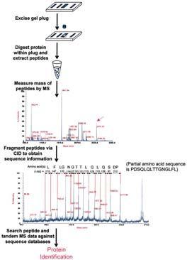 biochemistry and molecular biology education pdf