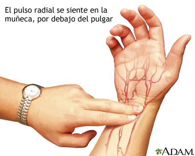 El pulso es el número de latidos cardíacos por minuto. El pulso se puede medir en zonas por las cuales la arteria pasa cerca de la piel....