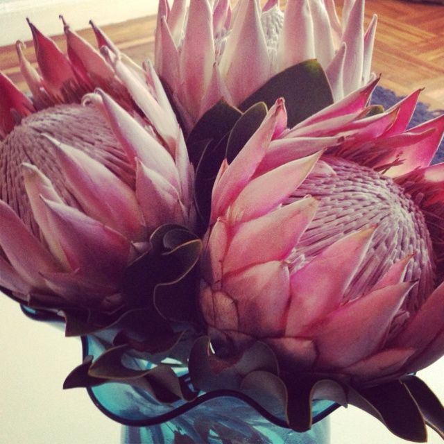 Proteas, these are fab and they last for a long time in a vase.