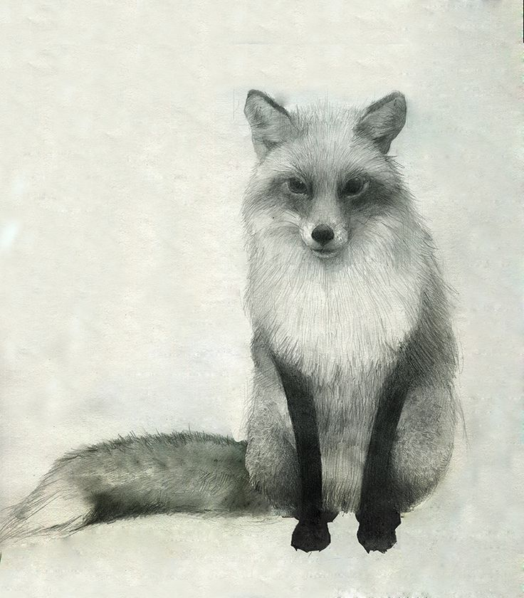 Red Fox Drawning :o                                                                                                                                                                                 More