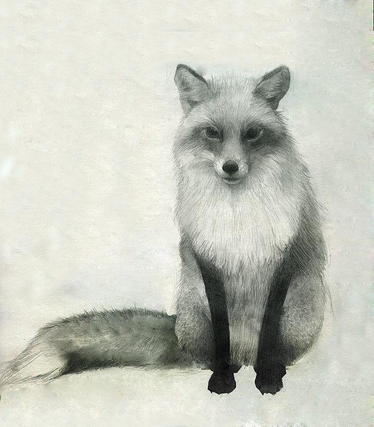17 Best Ideas About Fox Sketch On Pinterest Cute