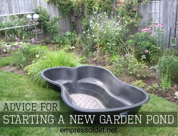 advice for starting a new garden pond gardens gardening