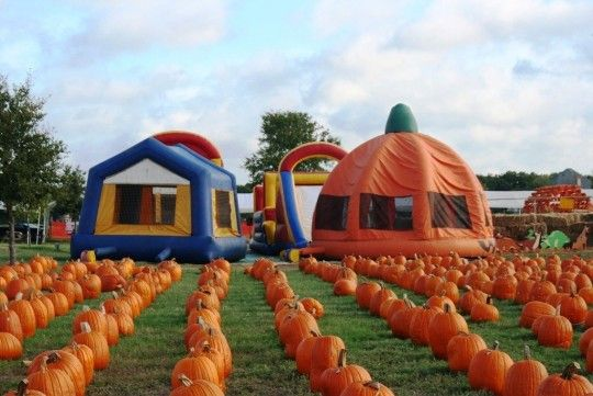 Flower Mound Pumpkin Patch Flower Mound, Texas #Kids #Events