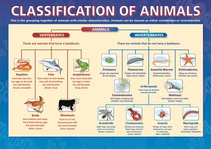 Classification of Animals, Dicotomous Key, Taxonomy, Biology