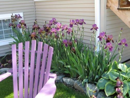 Purple flowers. Purple chair. <3