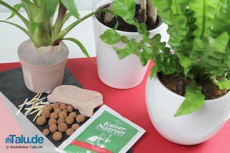 Die besten 25 kleine hauspflanzen ideen auf pinterest for Kleine fliegen im topf