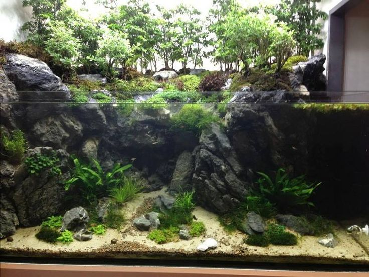 523 best images about paludarium on pinterest crested Aquarium landscape