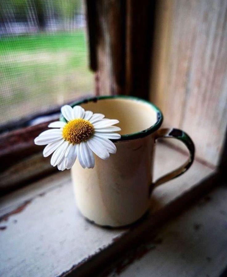 """""""Bazen hayat yorar insanı... Şarkılar yorar... Beklemek yorar... Özlemek yorar... Affetmek yorar... Hoş görmek yorar... Boş vermek bile yorar... Ve insan susar... Her şeye, her kese rağmen .... Elinden gelen tek şeyi yapar BAĞIRA BAĞIRA SUSAR!."""