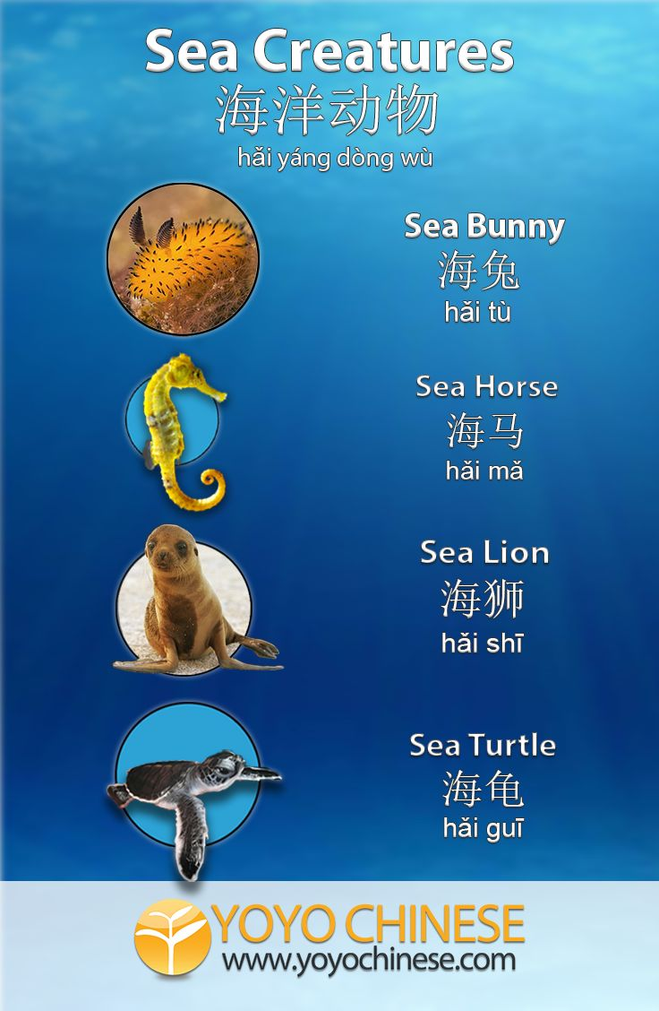 132 best learn chinese images on pinterest learn chinese learn how to say sea bunny and other cute sea creatures or k i kristyandbryce Gallery