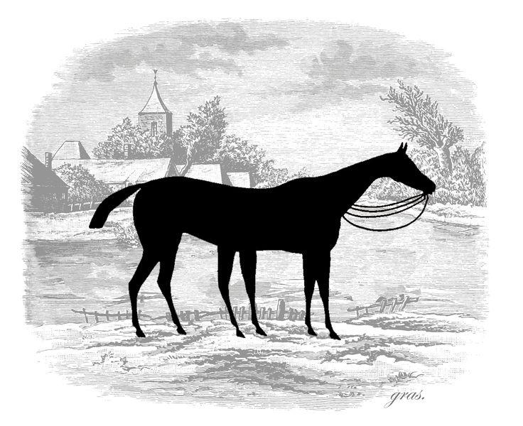 il·lustració. Horse. gras
