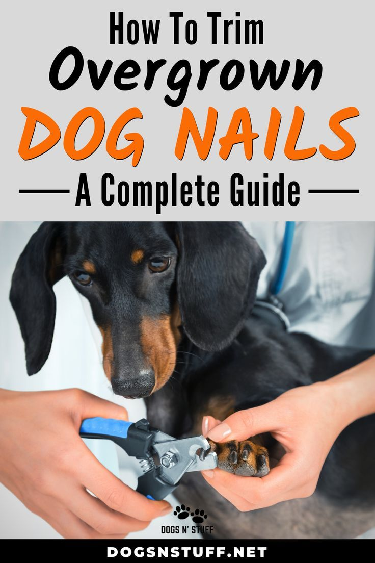 How to trim overgrown dog nails a complete guide dog