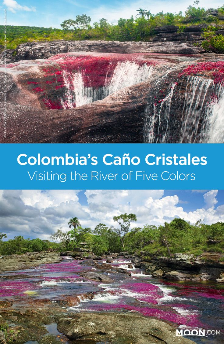 "Take a hike to the vibrant ""River of Five Colors"" in Colombia's Amazon region, and see Caño Cristales in all its glory. Learn about exploring this region in full with this detailed overview of excursions to Los Llanos' Parque Nacional Natural Sierra de la Macarena."