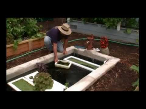 ▶ Growing organic duckweed on floating raft for aquaponics in same pond or tank as your tilapia - YouTube