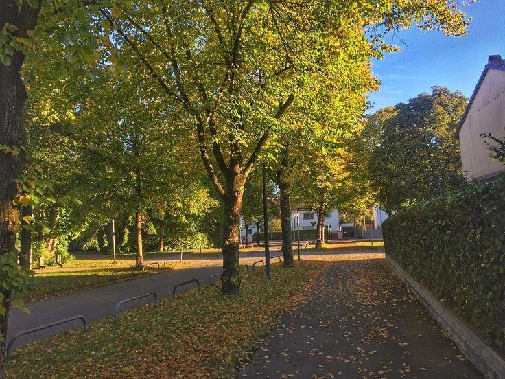 Goldener Herbst in #München.   #latergram #trudering #mingaoida