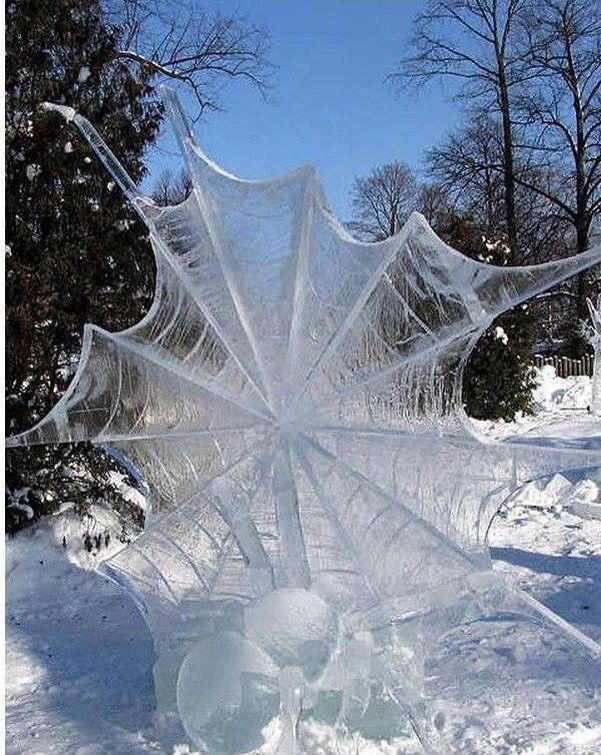 Spiderweb frozen in winter