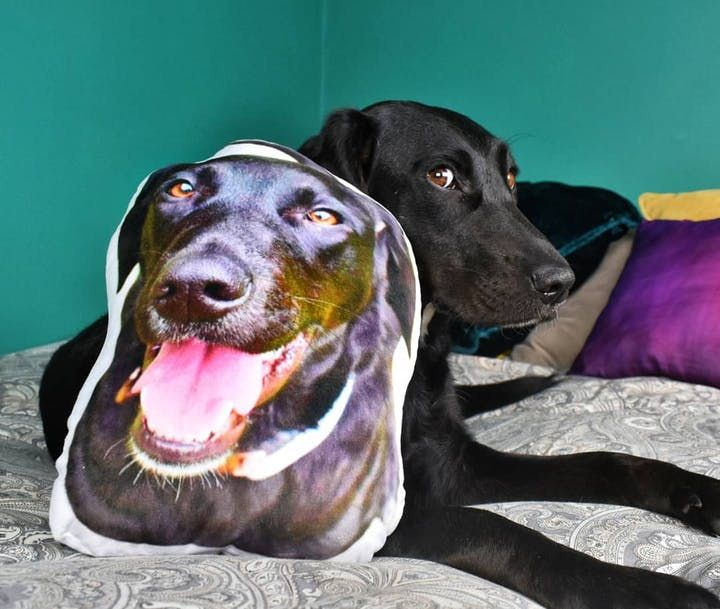 Happy Customers Pawjoy In 2020 Pet Photo Pillow Personalized Pet Pillow Dog Pictures