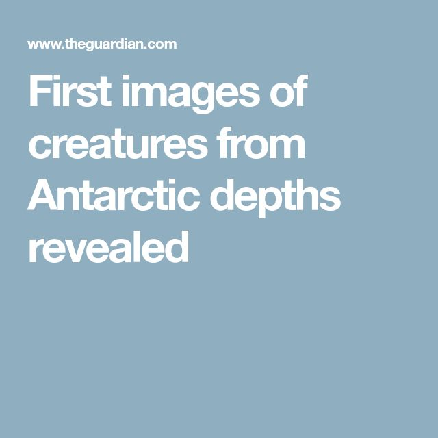 First images of creatures from Antarctic depths revealed