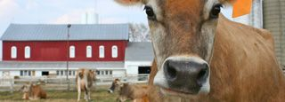 Real Raw Milk Facts - A Raw Milk Information Clearinghouse