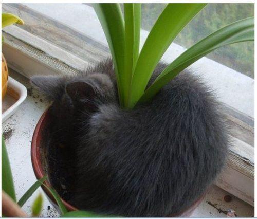 植木の一部のような猫