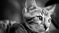 Durante la Edad Media, los gatos se asociaban con la brujería, y el día de San Juan, la gente de toda Europa los metía en sacos y los tiraba a hogueras. En los días santos, la gente celebraba lanzando gatos desde las torres de las iglesias.