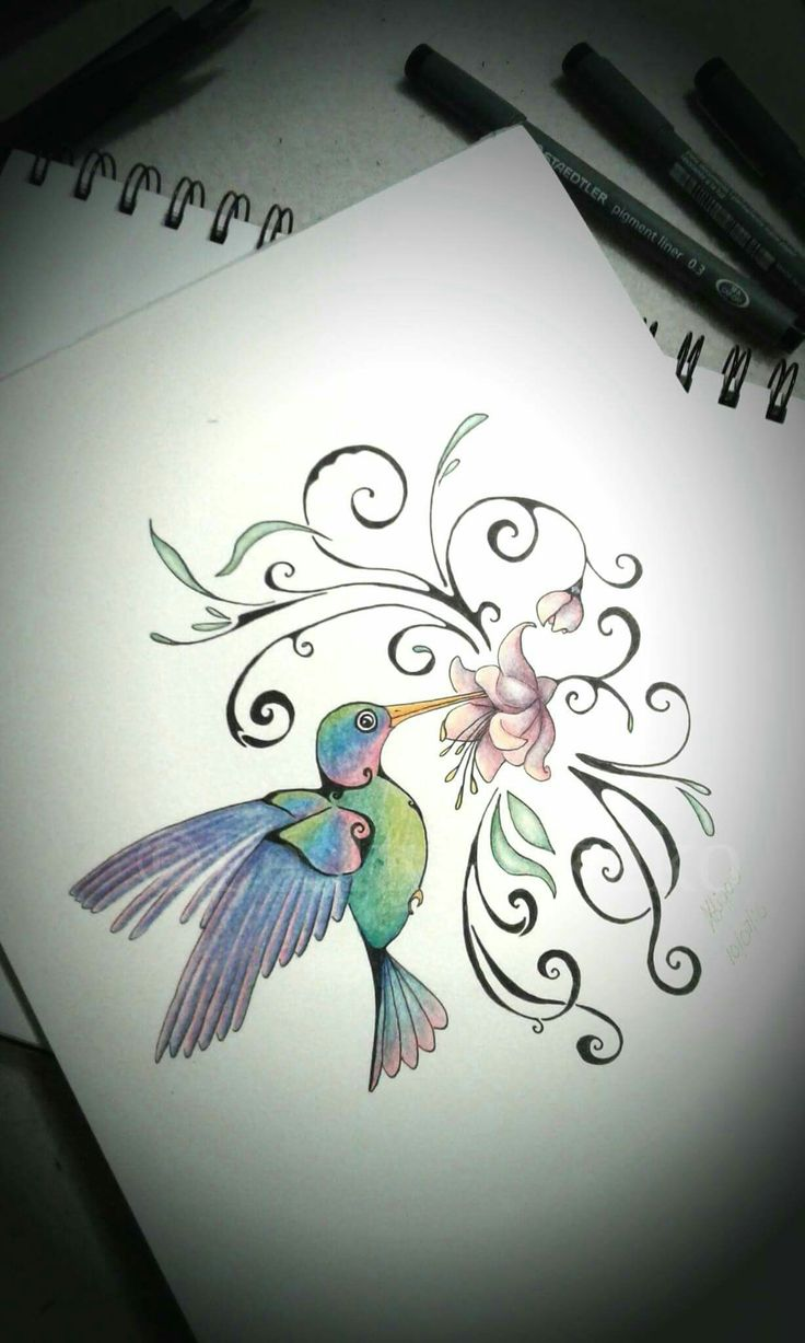 Hummingbird created with coloured pencils and pen