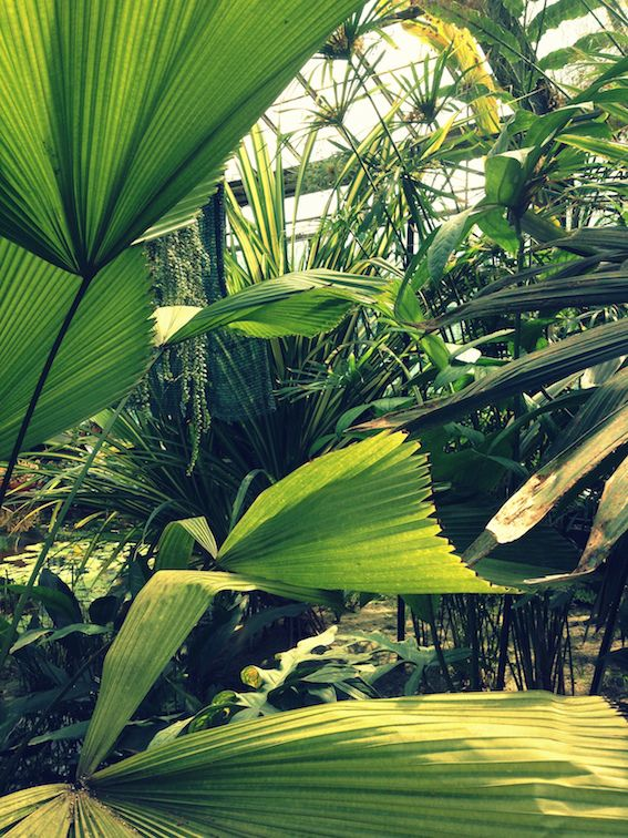 #leaves #inspiration #garden #palm