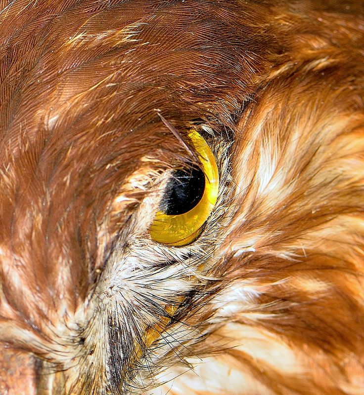 Hawk eye by Welbis Pestana on 500px