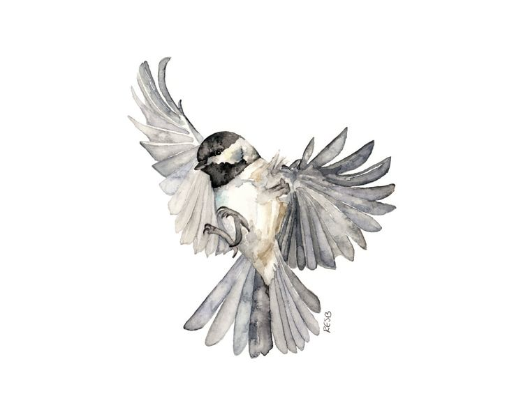 Oiseau en vol peinture - imprimer à partir de peinture aquarelle originale, « Freedom », mésange, Songbird, Flying Bird par TheColorfulCatStudio sur Etsy https://www.etsy.com/fr/listing/217462993/oiseau-en-vol-peinture-imprimer-a-partir