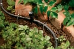 Sprinkler Juice: Converting Your In-ground Sprinkler System to Drip Irrigation