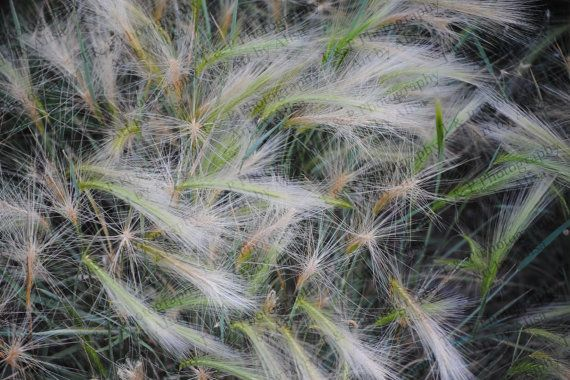 digital download photography wild grasses by Turtlesandpeace