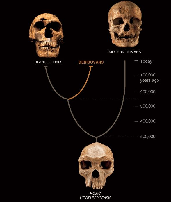 Denisovans harbour ancestry from an unknown archaic population, unrelated to Neanderthals, page 1