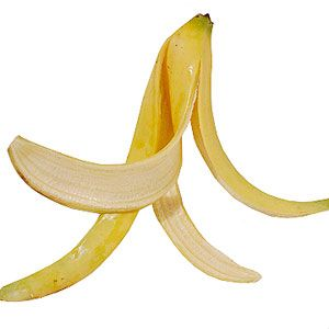 """bury a banana peel 1"""" down at the base of a rosebush. The potassium will feed the plant and help it fight of diseases.  ***Used banana peels, egg shells, coffee grounds and crushed Tums with calcium when planting tomatoes 5-9-12.  Sherry***"""
