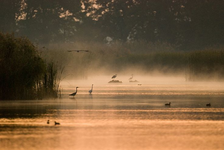 Milicz Ponds, Poland © Wiesław Dzięgielewski
