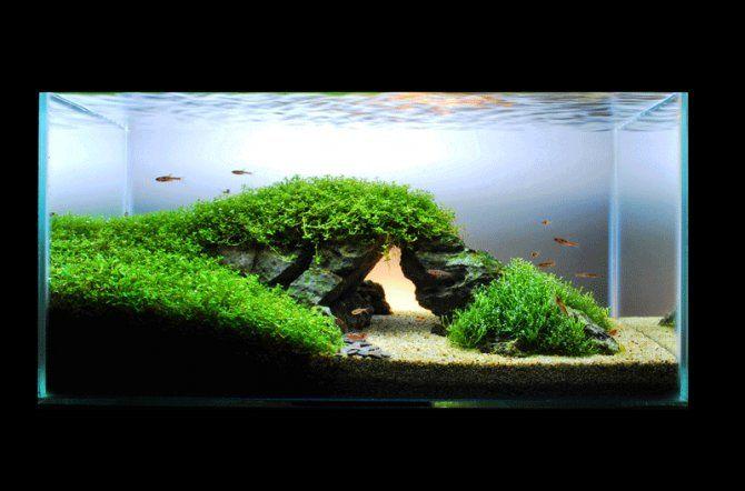 aquascaping aquarium ideas aquascape ideas fish aquariums aquascaping ...