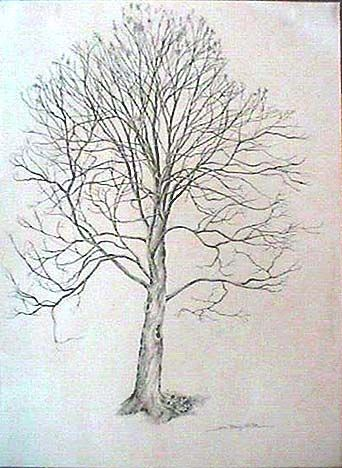 Maple Tree Seeds Drawing Images & Pictures - Becuo