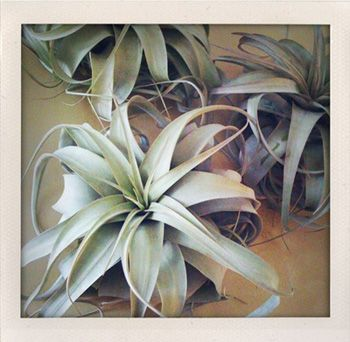 Air plants are my newest obsession - no soil needed, and very easy to care for.