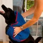 cool Christmas Gifts for Dogs