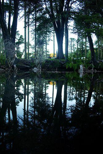 Lago Icalma - Chile