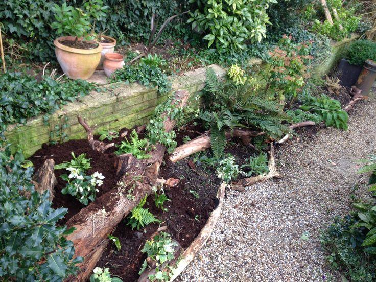 Stumpery The Beginning · Garden ShadeWoodland ...