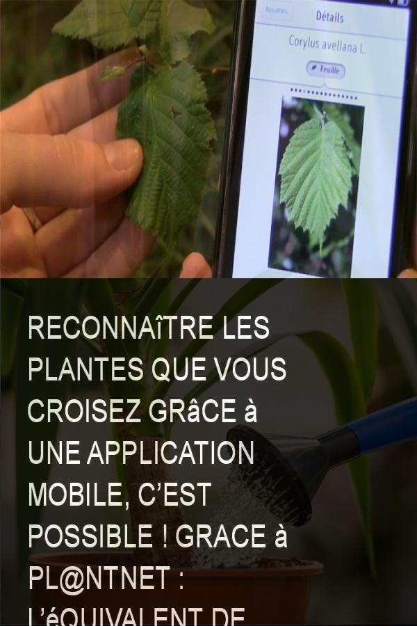 Reconnaitre Les Plantes Que Vous Croisez Grace A Une Application Mobile C Est Possible Grace A Pl Ntnet L Equivalent De S Mobile Application App High Tech
