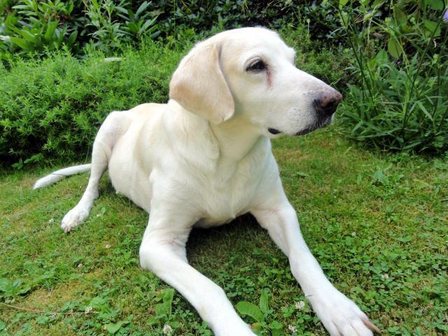 Le billy est une race de chien originaire de France. C'est un chien courant de grande taille de couleur blanche, café au lait ou blanche et orange ou blanche et citron.  D'un naturel facile et agréable, c'est avant tout un chien de chasse qui a besoin de beaucoup d'exercice s'il vit en appartement, ce qui n'est pas l'idéal. Obéissant, gentil avec les enfants, il n'est jamais agressif, sauf avec ses congénères, et même au sein de la meute. Très peu mordeur, il fait un piètre gardien.
