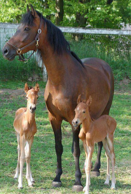 Proud Mother with her beautiful twin colts....