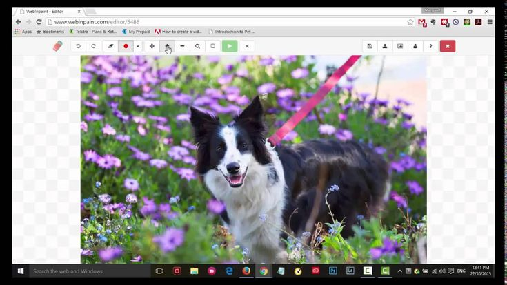 Leash Removal in Photoshop