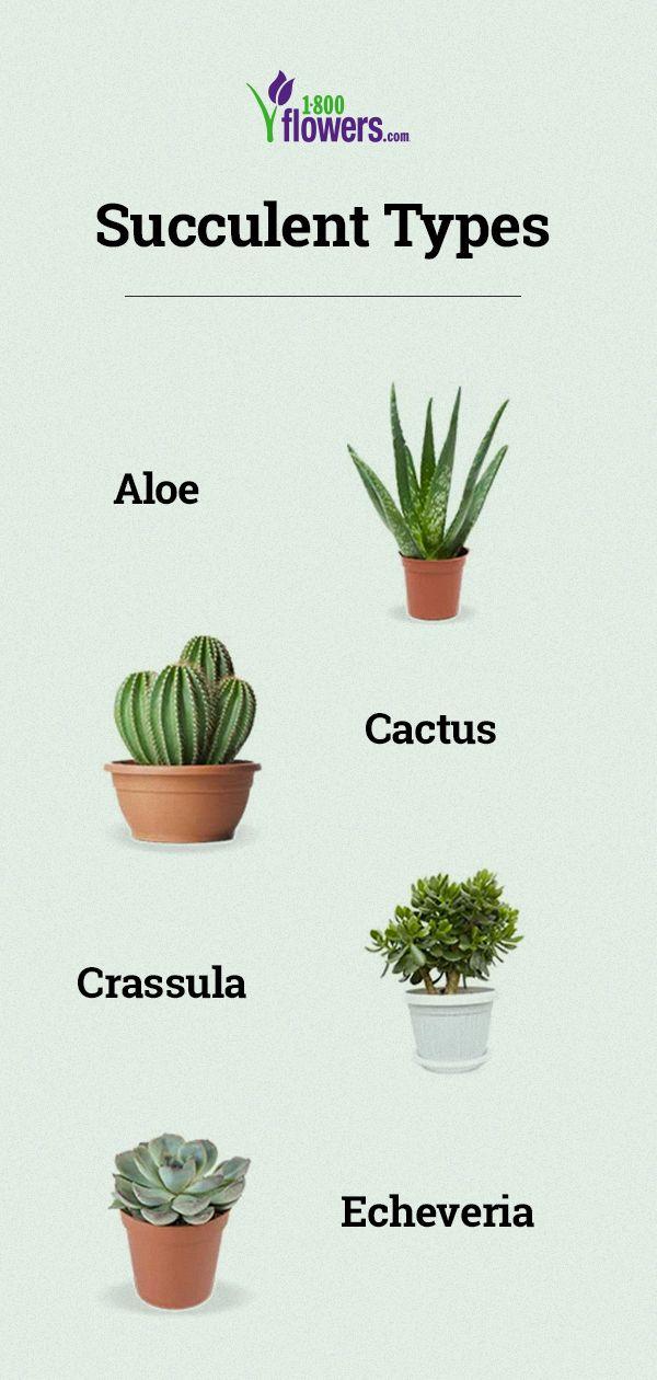 Types Of Succulent Plants Succulent Varieties Types Of Succulents Plants Different Types Of Succulents Types Of Succulents