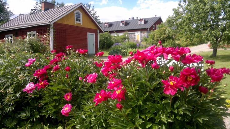 Kenkavero, Mikkeli, Finland (photo AN) www.kenkavero.fi