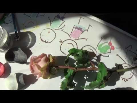 вогнутости лепестка розы из Холодного фарфора от Риты - YouTube