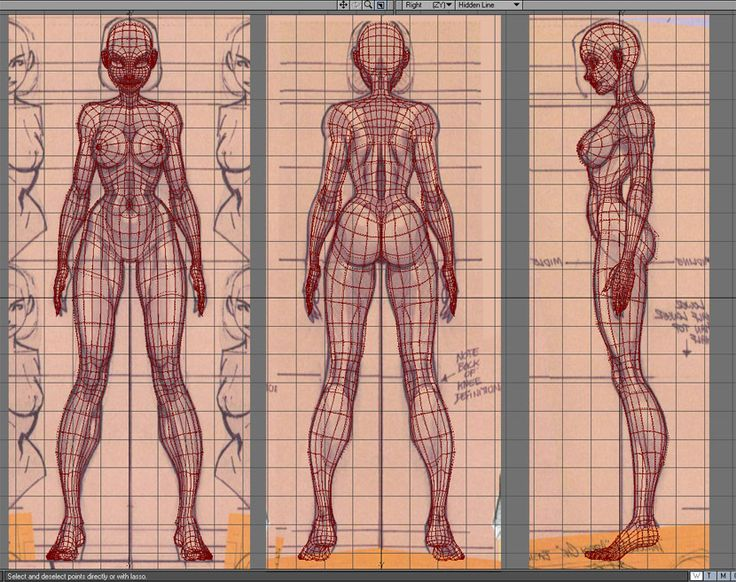 Female character 3D wireframe front, back, side