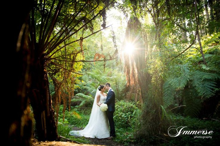 Lyrebird Falls - Immerse Photography