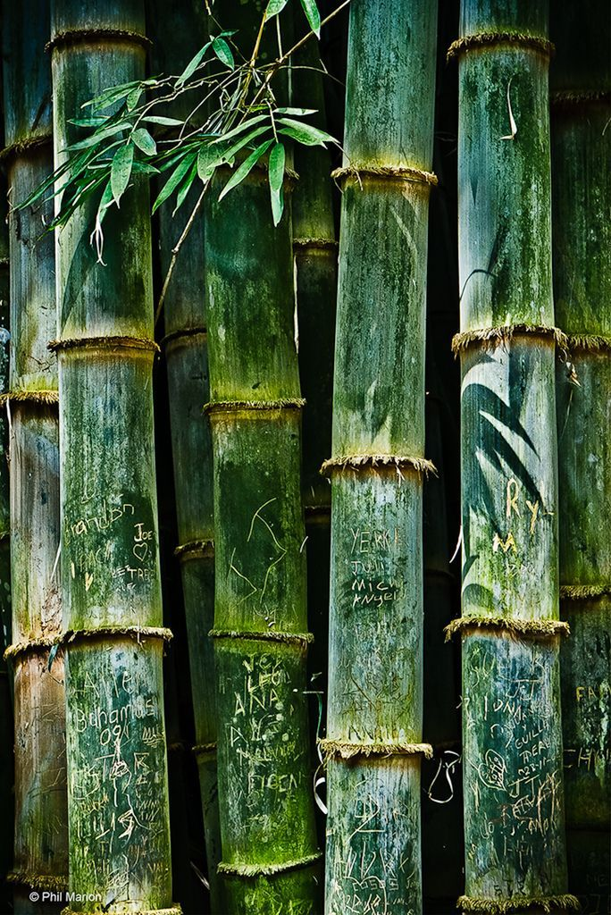 10 Amazing Places In Costa Rica Time To Travel Bamboo Art
