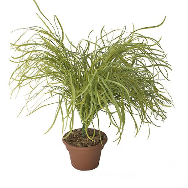 1000 id es sur le th me plante artificielle exterieur sur for Plante grimpante artificielle exterieur